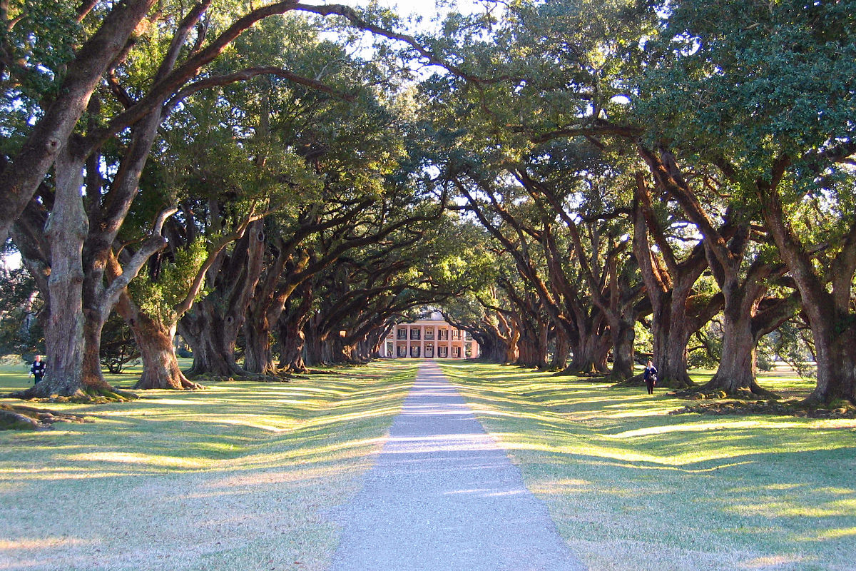 A path of oak trees leading up to the Oak Alley Plantation.
