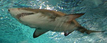 Shanghai Aquarium