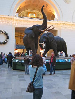 Jenny Elephants