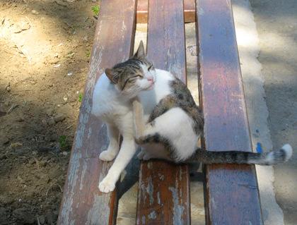 Knossos Cat