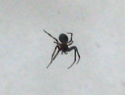 Wesley Spider