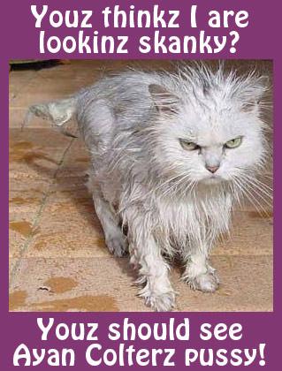 Skanky Cat