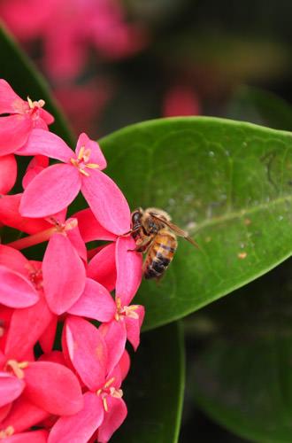 Hana Flower