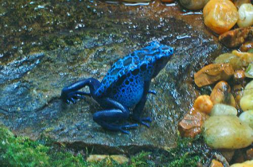 Animal Kingdom: Jungle Frog!