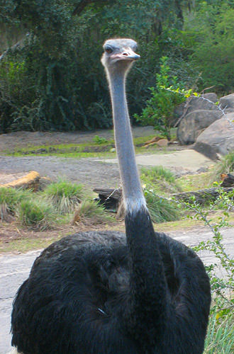 Animal Kingdom: Ostrich Stop!