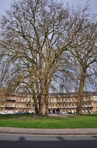 Bath Circus Tree