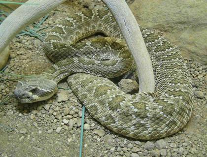 Snake!