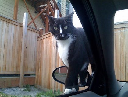 Psycho Cat on my car door