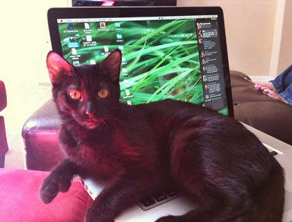 Pussy on the Computer