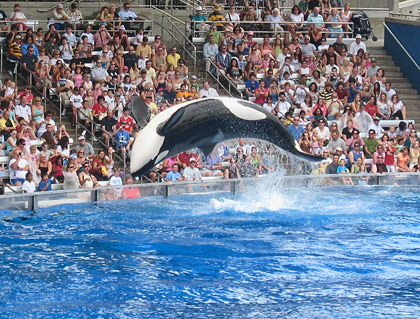 Sea World Shamu Show