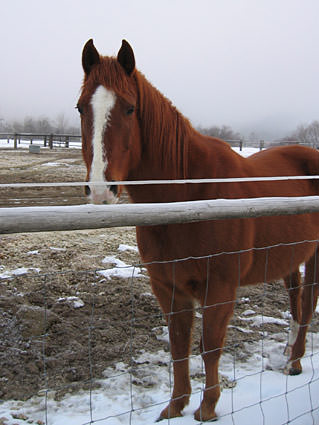 A horse behind a fence!