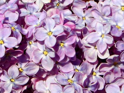 TT: Purple