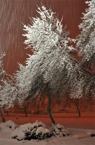 Snowy Cemetery Tree