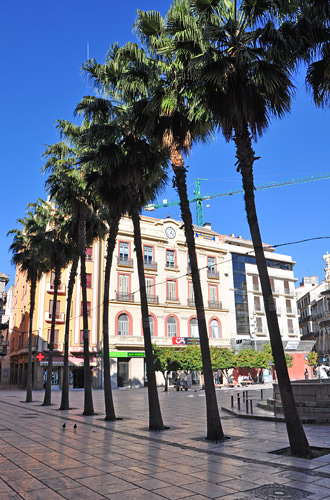 Row of Palms in Downtown Malaga