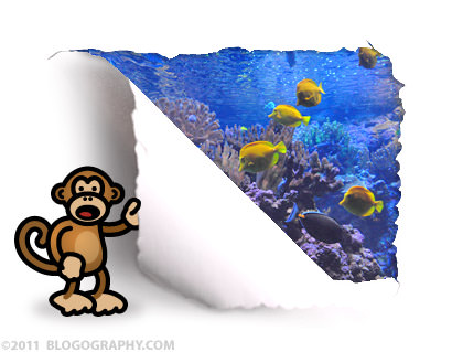Bad Monkey Looks at a Fish Tank