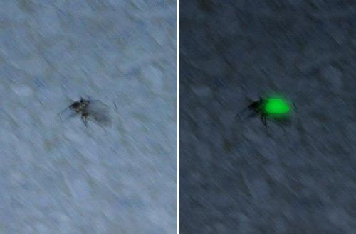 Lightning Bug!