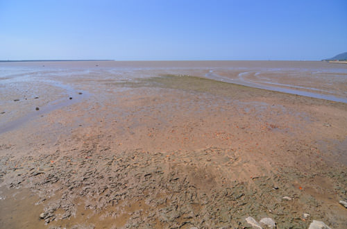 Cairns Mud Flats
