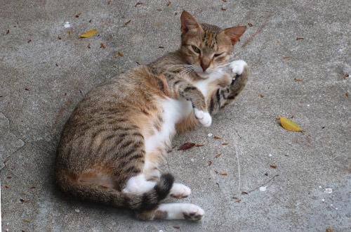 SCUBA Cat!