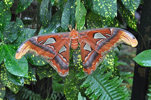 Moth!