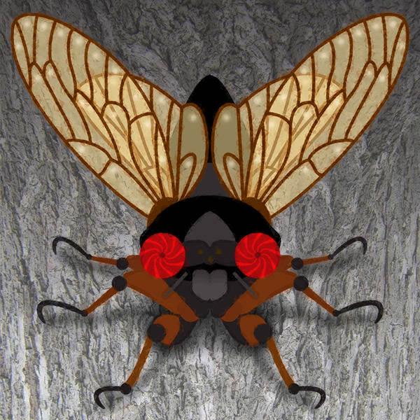 Cicada Crazy!