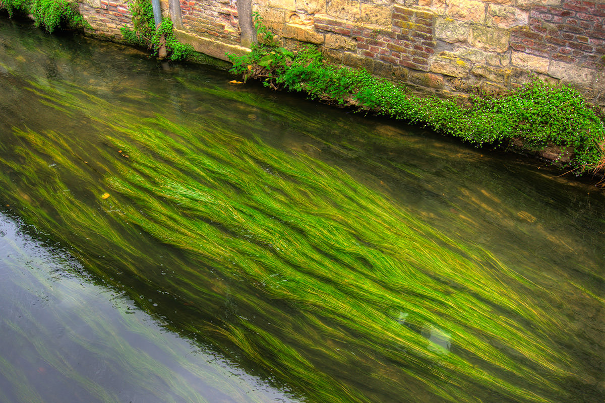 Green River in Maastricht