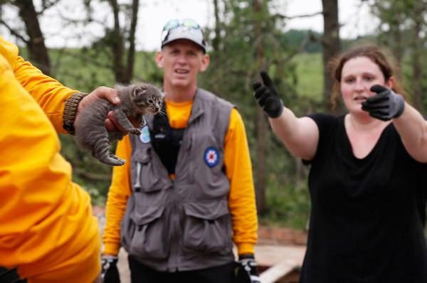Oklahoma Rescue Kitty... Sue Ogrocki/Associated Press