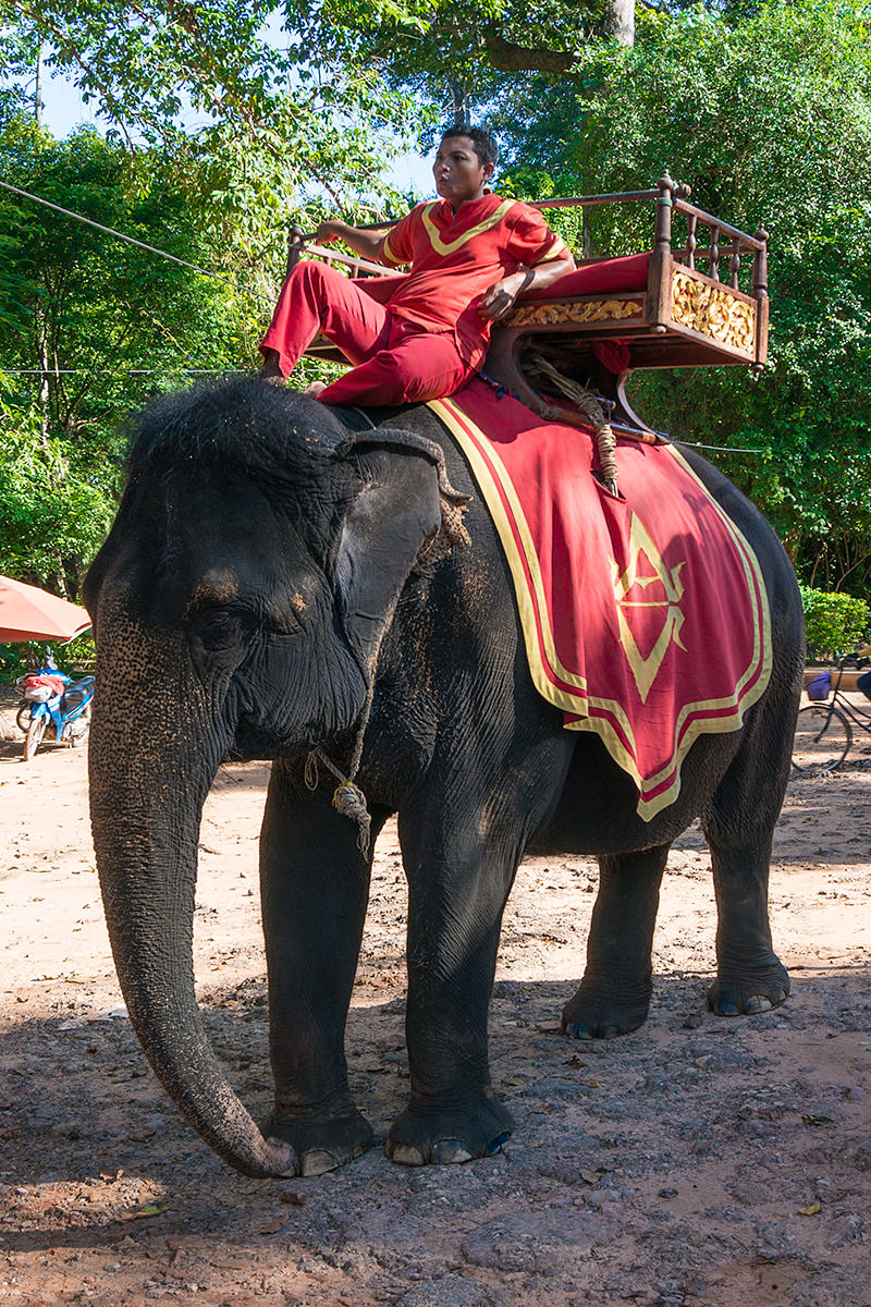 Elephant Ride on Chitham