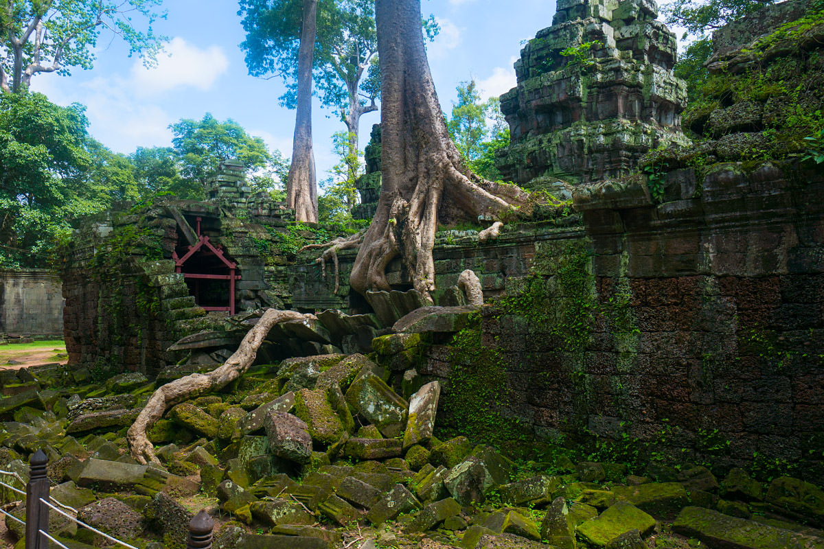 Ta Prohm Temple Angkor