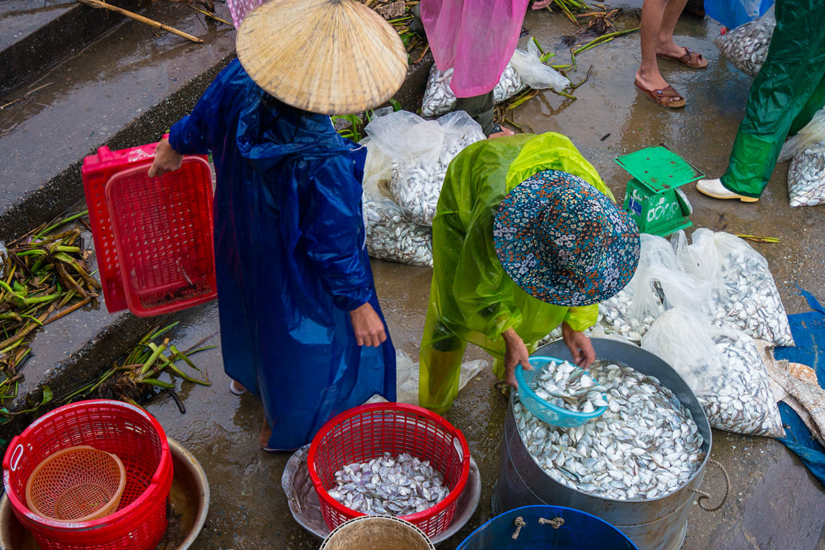 Fish Market Washing Fish