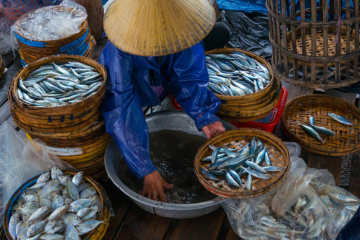 Fish Washing in Hoi An, Vietnam