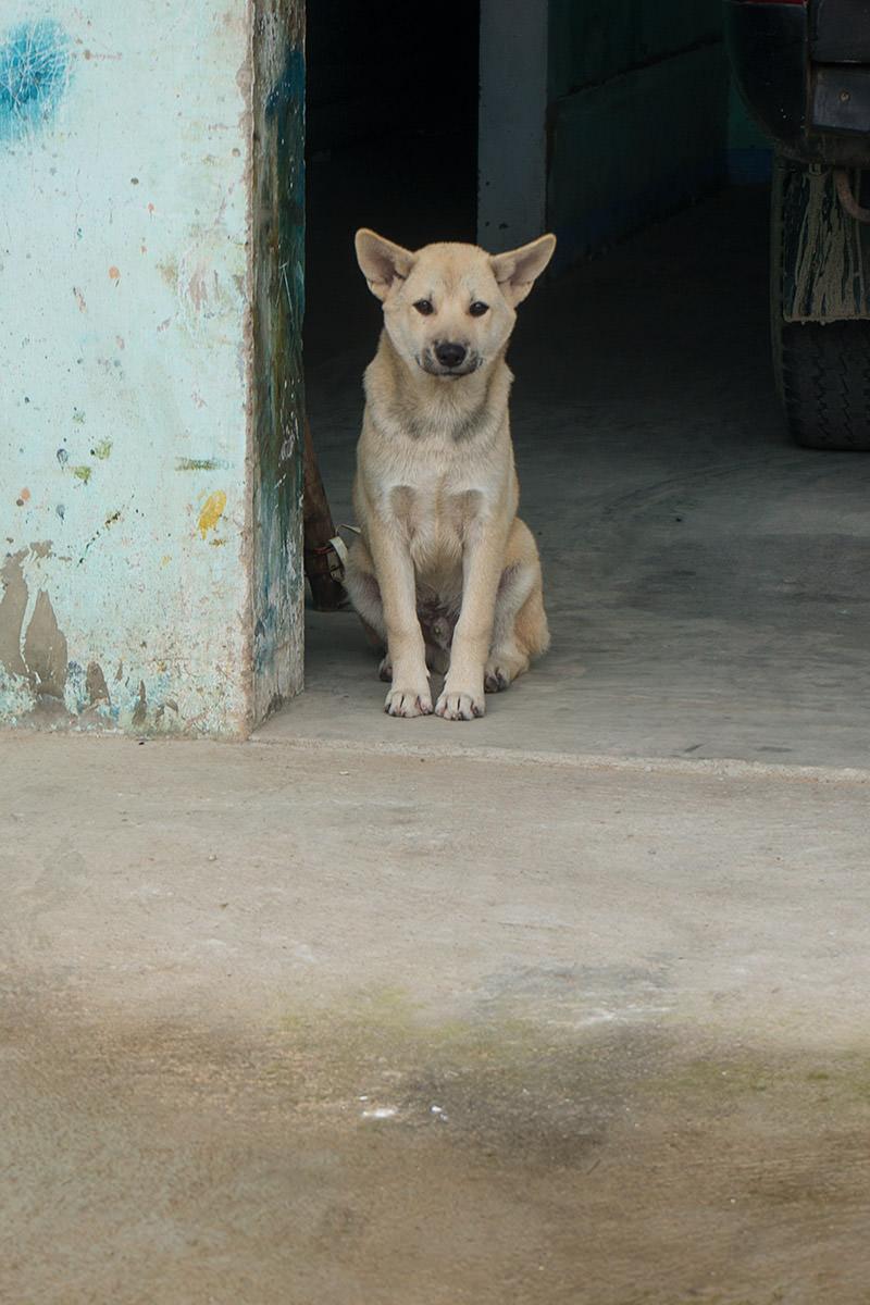 Puppy in Hoi An, Vietnam