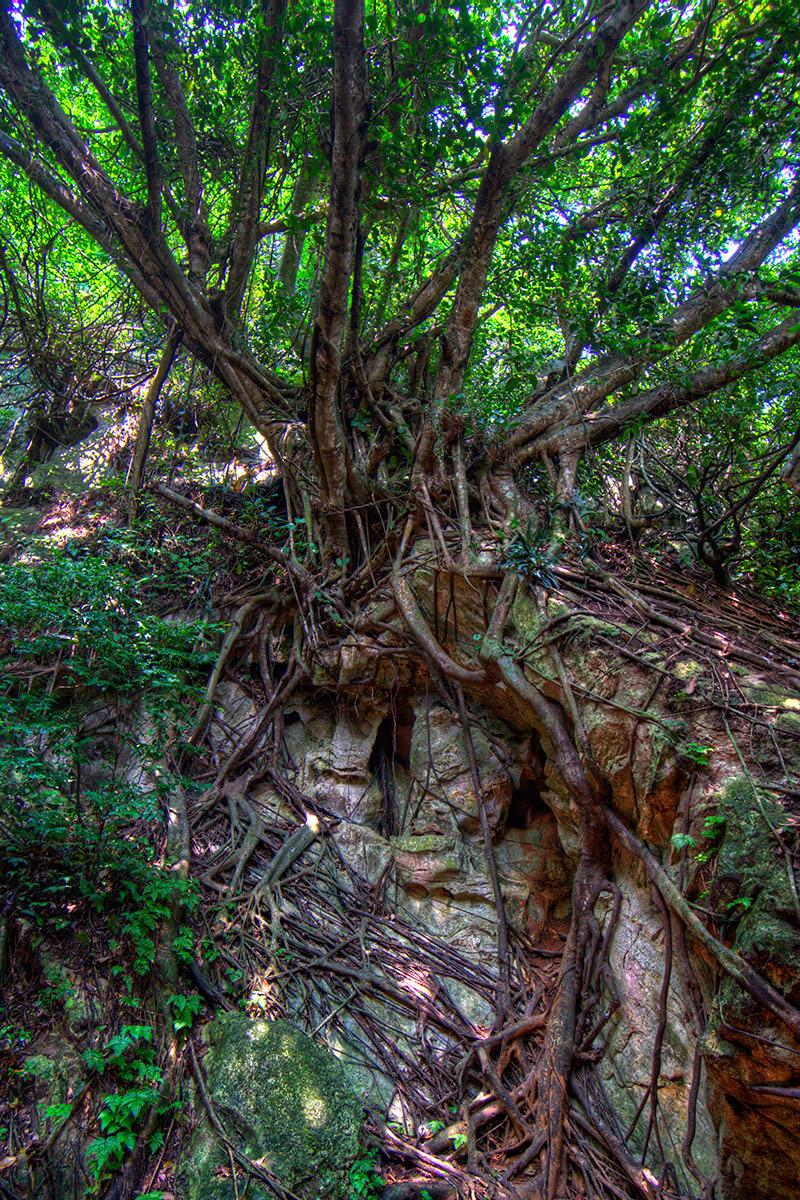 Marble Mountain Tree