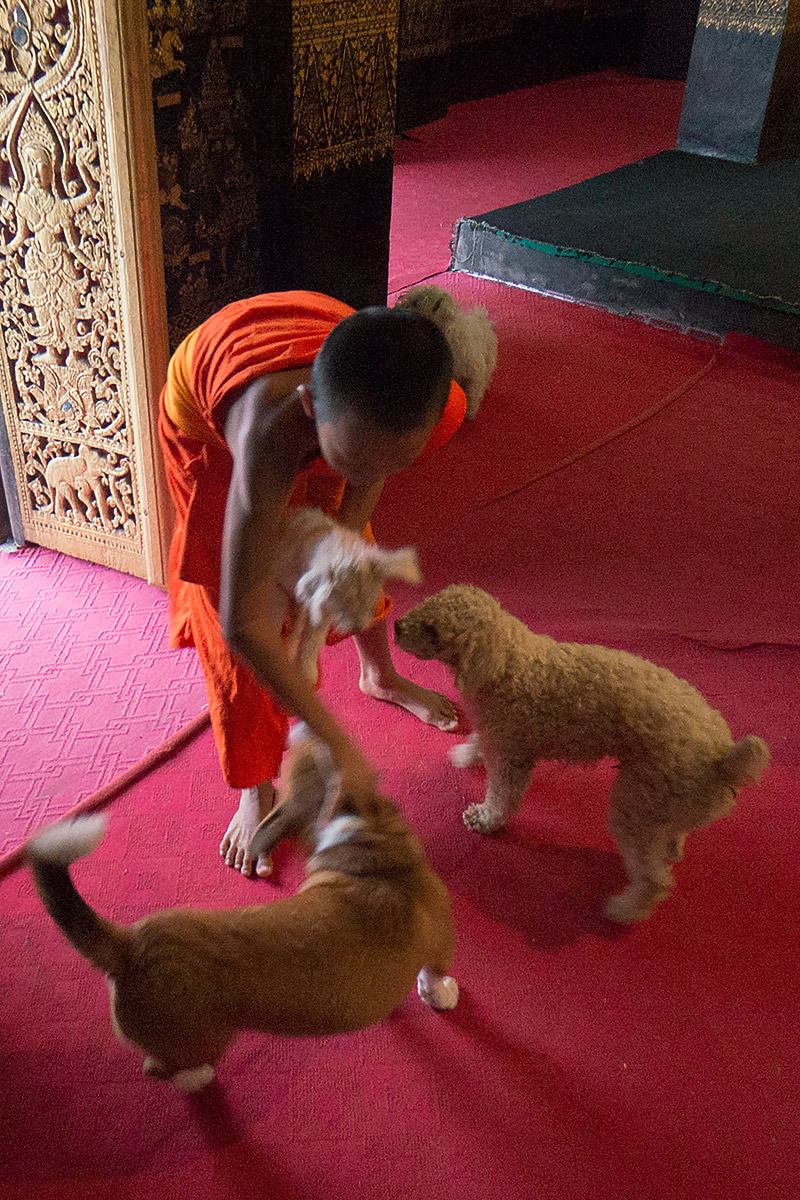 Monks Call to Prayer at a Temple in Luang Prabang, Laos