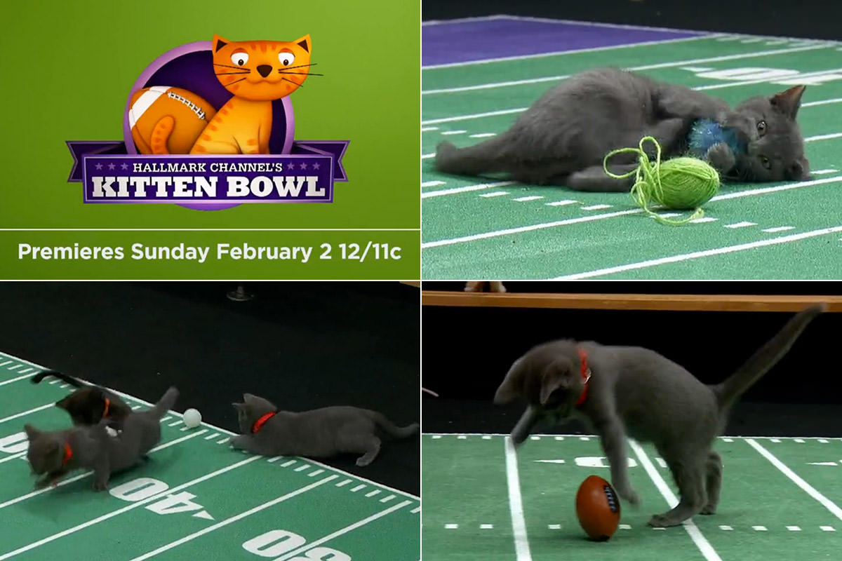Kitteh Bowl at the Kitten Bowl!