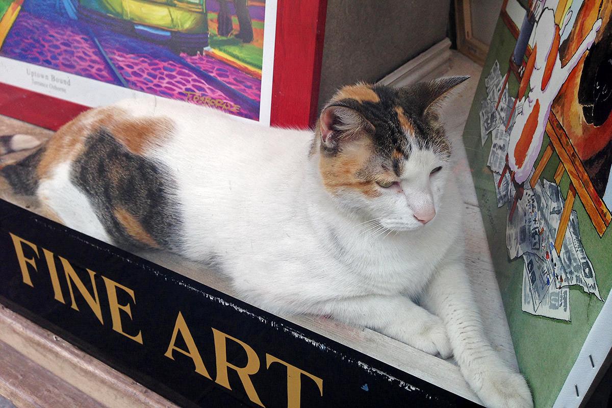 Shop Cat!