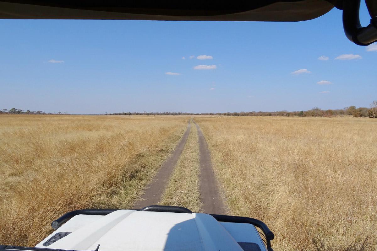 Hwange Grasslands