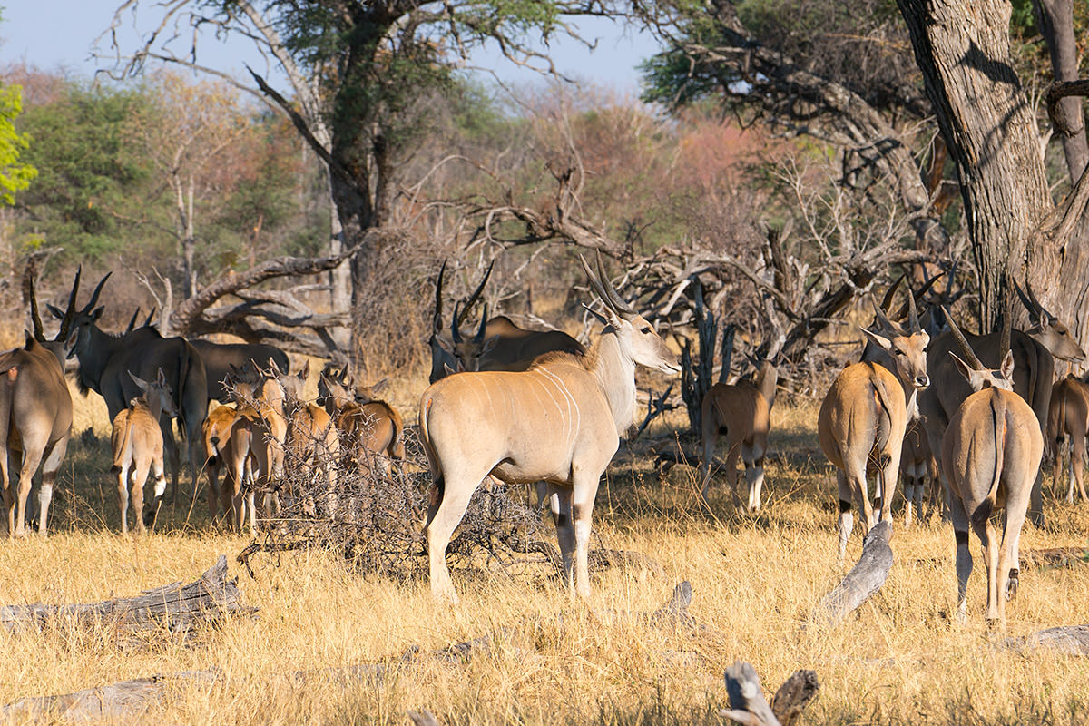 Hwange Animals