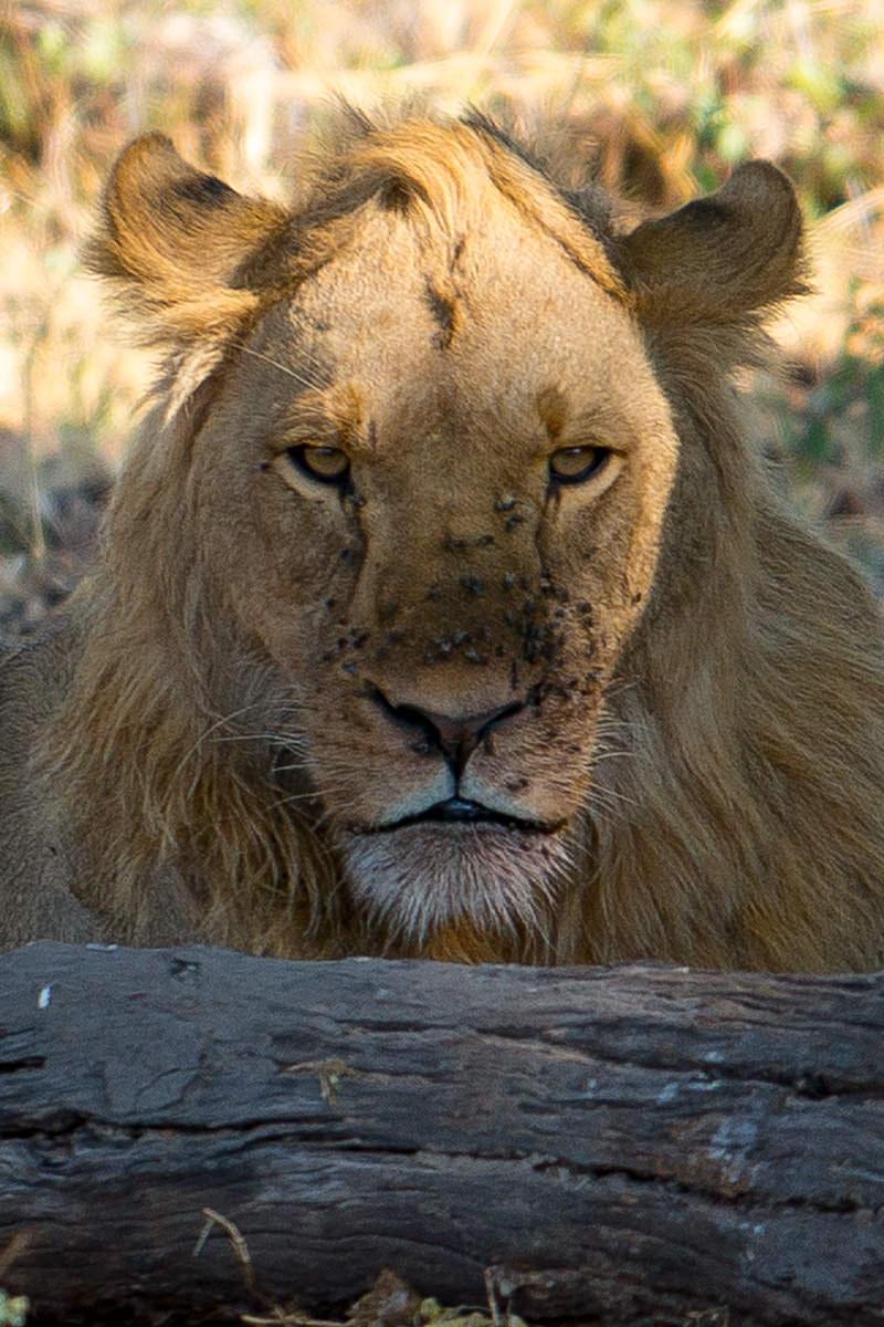 Hwange Lions