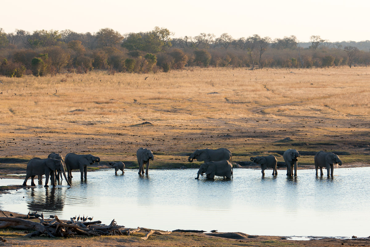 Hwange Elephant Watering Hole