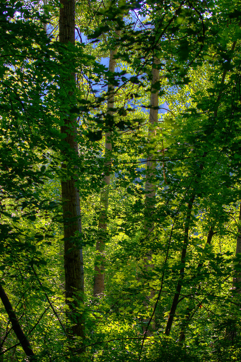 Sony FE 70-200 Lens Test: Forest Light