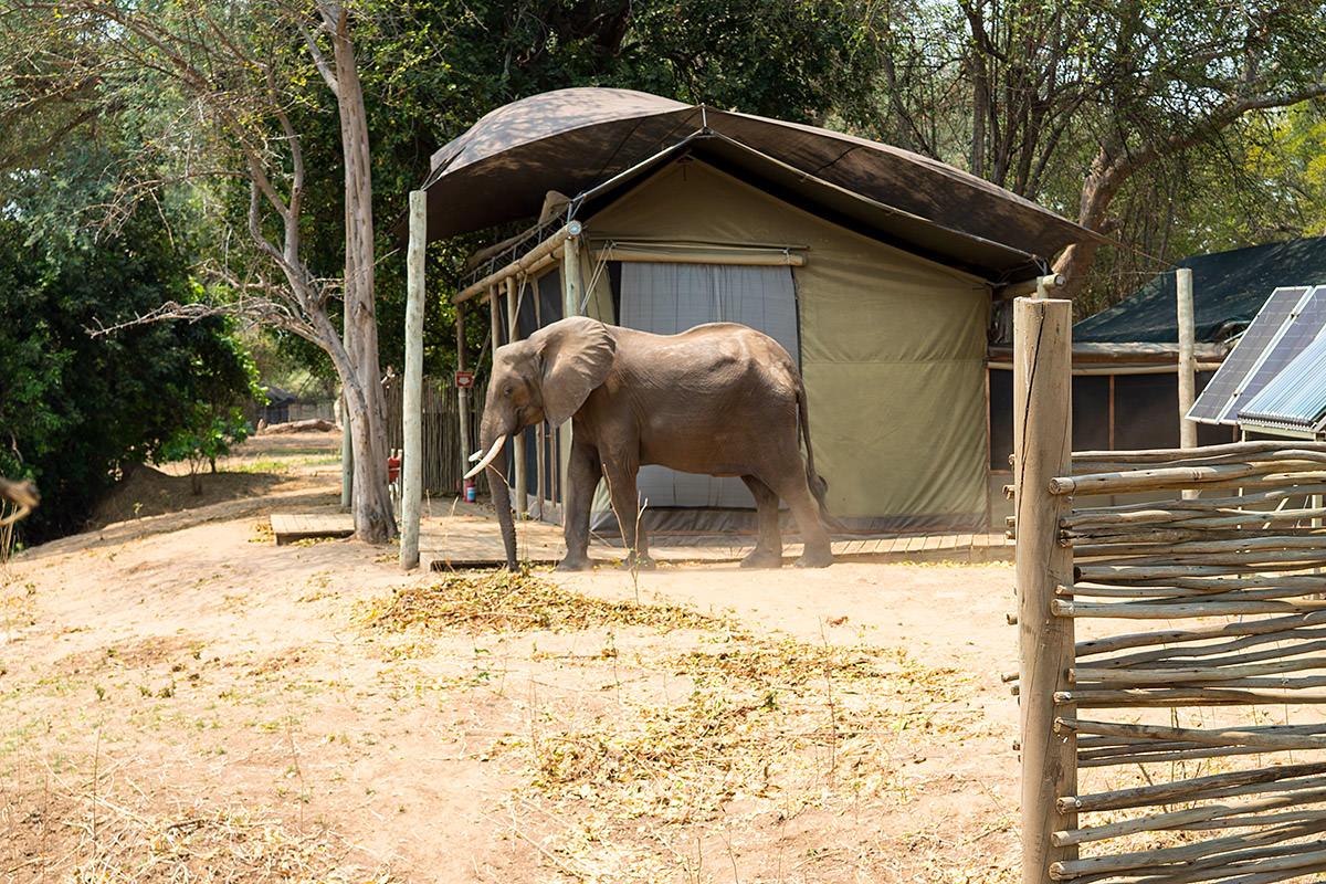 Elephant of Ruckomechi
