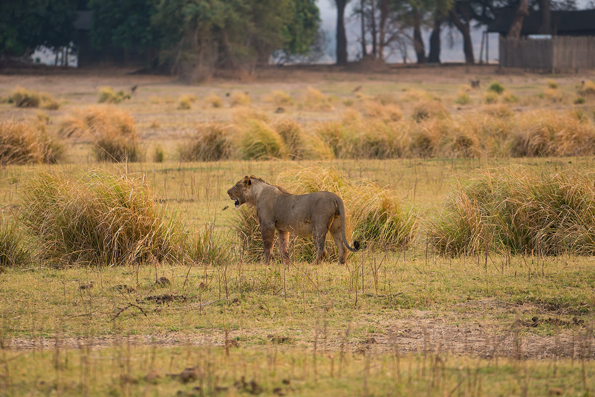 Mana Pools Game Drive