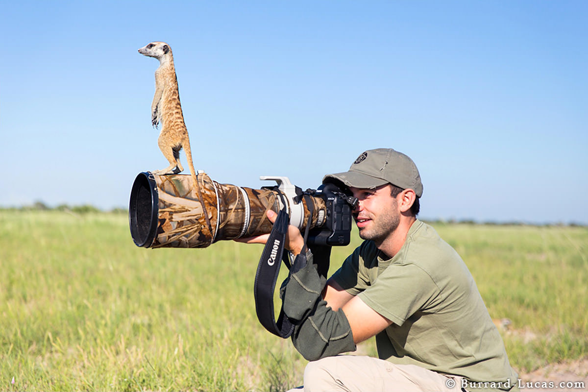 Meerkats by Will Burrard-Lucas