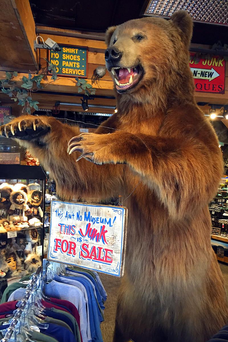 Stuffed Bear in Gift Shop