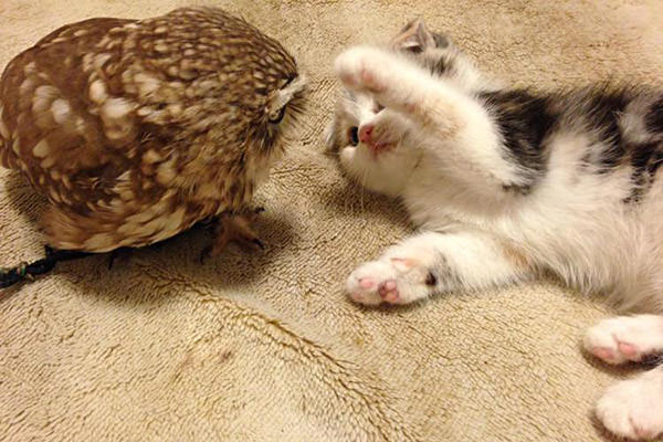 Owl and Kitten Pals