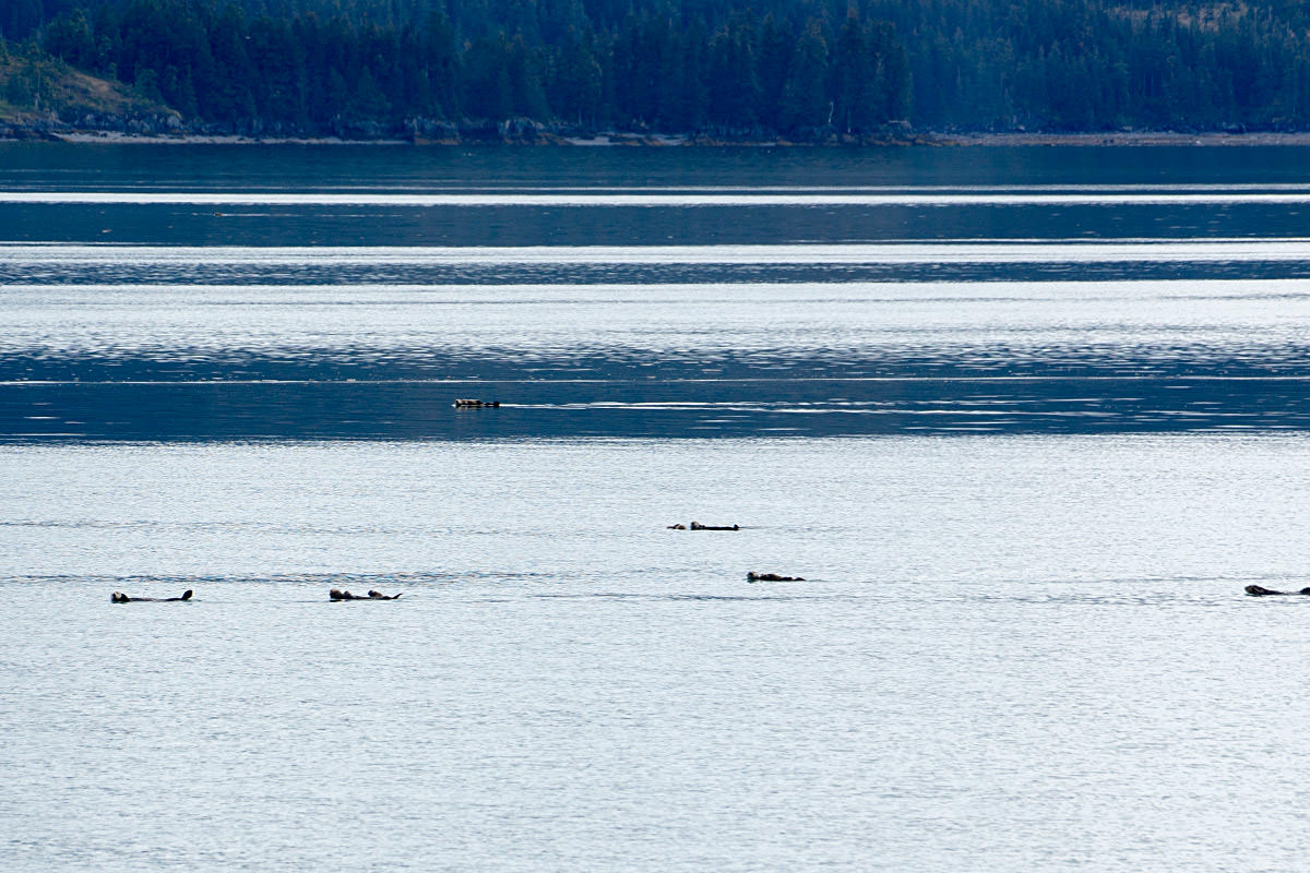 Otter Bumps