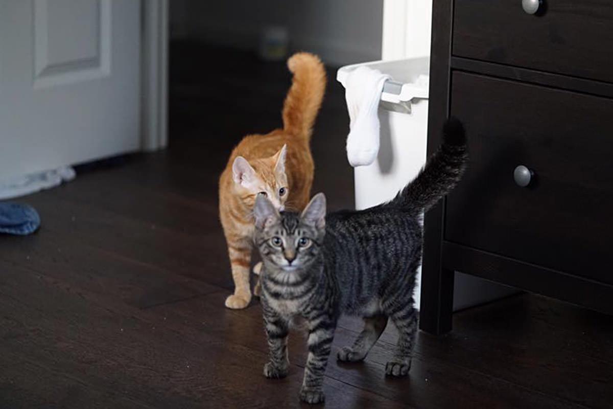 Starving Kittens!