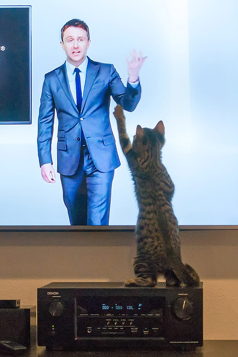 My cat high-fiving Chris Hardwick