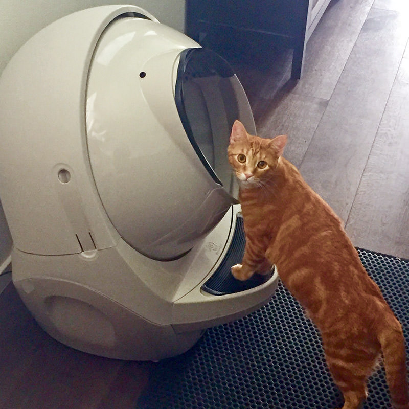 Jenny and Litter Robot