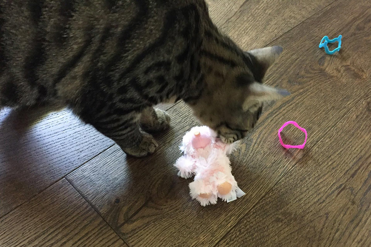 Kitty Toys from Poppy and Dawg!